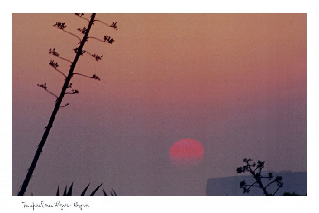 orange pink purple sunset with local tree in Algarve Portugal